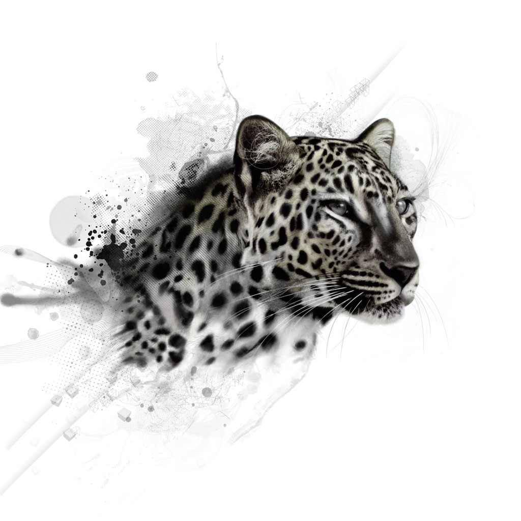 Leopards RULE!!!