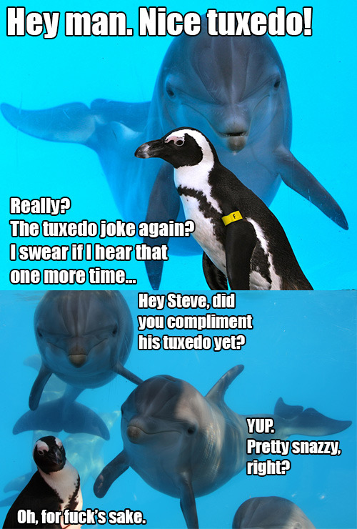 thefrogman:  Dolphins are bad at jokes. [original images]