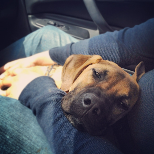 handsomecharlie:  Car rides make him sleepy :)