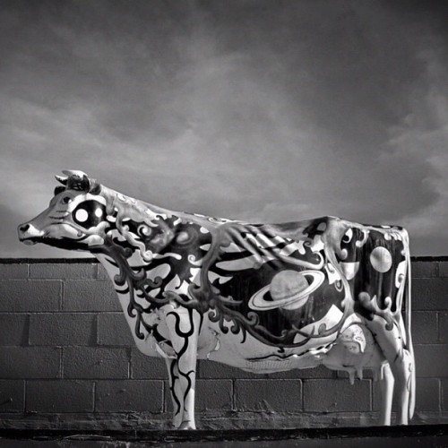#blackandwhite #bw #bnw #bandw #space #cow #art #universe #milky #way #aliens (Taken with instagram)