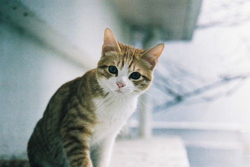 valete-farewell:  Cat (by TAKAHIKO)