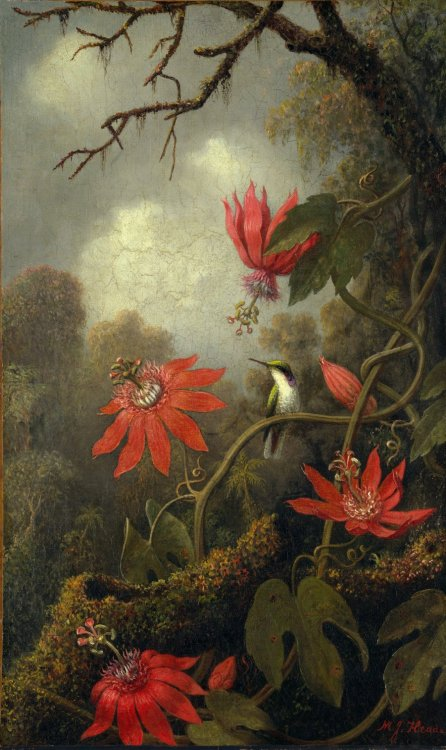 peira:  Martin Johnson Heade:  Hummingbird and Passionflowers (1875-1885) via The Metropolitan Museum of Art