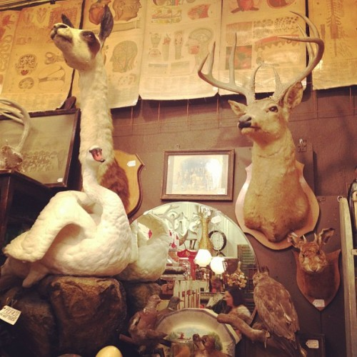 Hanging with my friends in Austin, TX (Taken with instagram)
