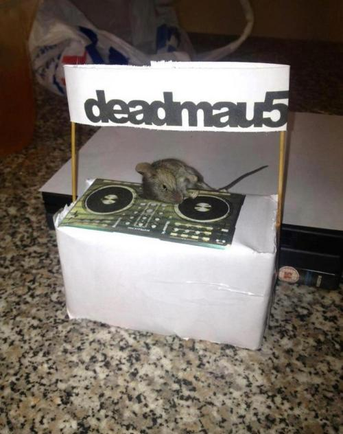 The Real deadmau5 :D