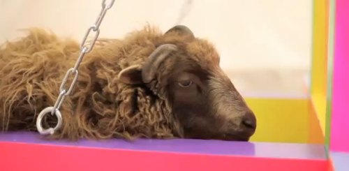 squishy-mew:  German art students ask Internet to decide if innocent lamb lives or dies Urgh. http://www.die-guillotine.com/ Go on the website and vote nein. I'm shocked at how equal the votes are.