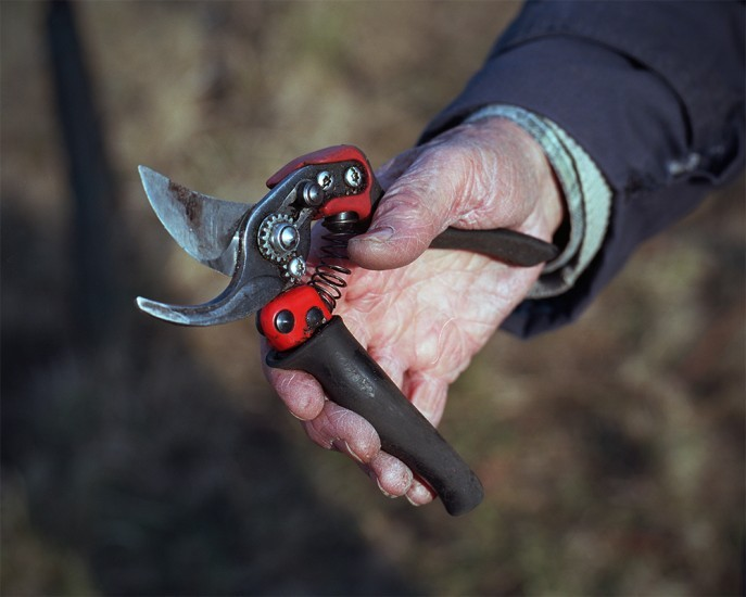 Joseph Binner's pruning shears, Ammerschwihr France. From the new project Domaine Binner.