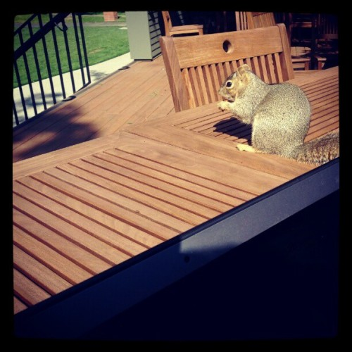 This squirrel is afraid of nothing. (Taken with Instagram at Mcgeorge Quad)