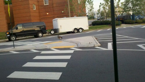blackrexgrossman:  come on man, you got wings, don't walk across the road, at least jaywalk or something, don't cross at the crosswalk, don't be a complete bitch