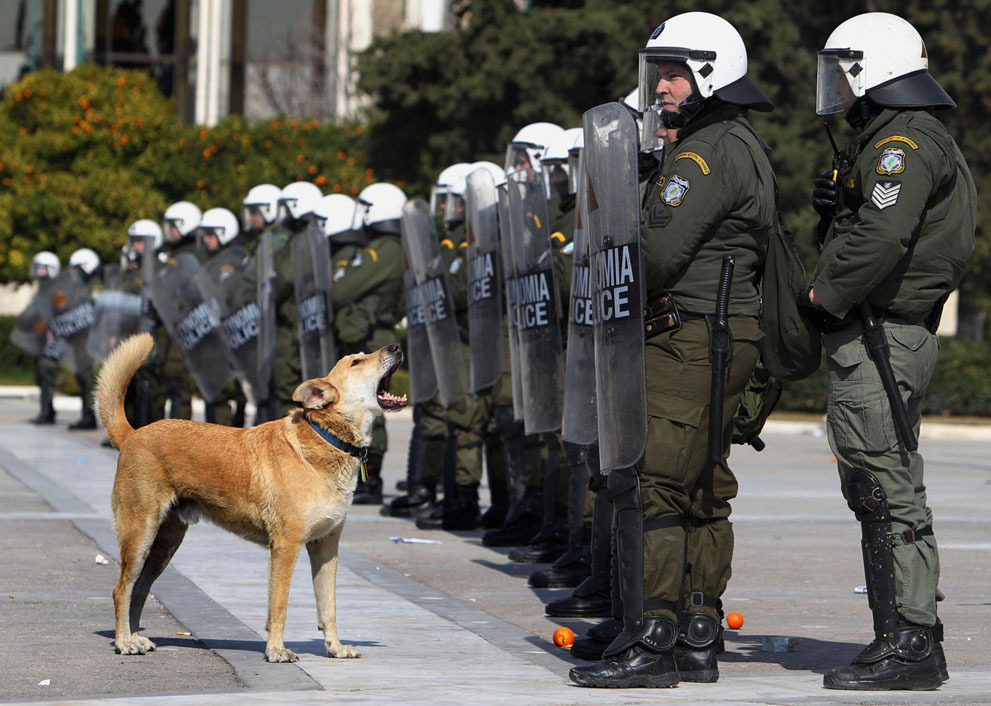 rebeldog:  17 feb 2012, #syntagma never stop barking photo by Thanassis Stavrakis