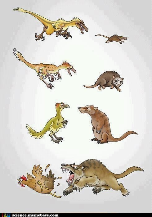 Food chain evolution