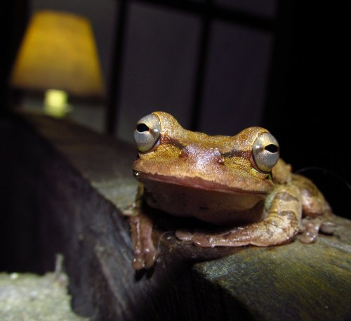 Una rana en la casa A frog in the house