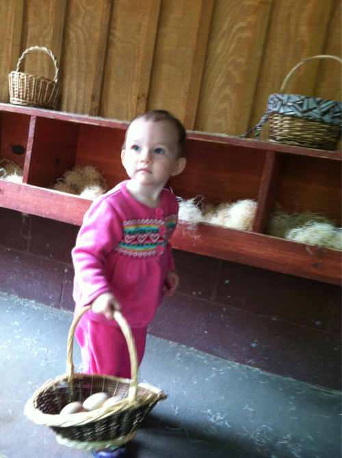 Collecting eggs at the Knoxville Zoo.