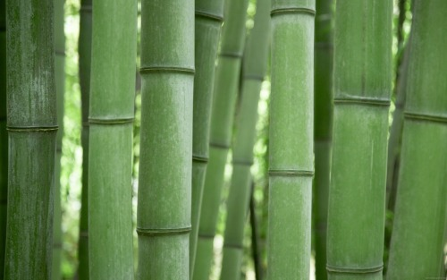 This picture reminds me guadua forests in my town. Guadua is a thicker bamboo variety, when it is growing, the terrain seems like if it was covered on spikes. I've heard of some people that almost got impaled on one of those. Anyway, the coolest thing is how much a guadua forest resembles a cathedral, a green cathedral in the nature, and that inspires true reverence.  There are other people who find quite disorienting the experience of walking through this kind of forest, and that's why it brings to my mind los duendes -translated as:Goblins- (nature spirits, that in this case, amuse themselves by messing with travelers' minds in the mountains and the countryside, making them lose their path by confusing them), which adds the usual creepy and mysterious qualities of woods all around the world.