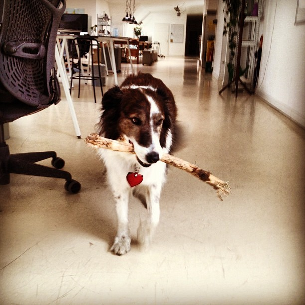 It's bring your dog to work day at the Maker's Loft! Meet Cookie, Phil's friendly canine pal.