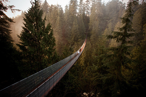 treeporn:  Capilano Suspension Bridge in Vancouver. By Braden Paul.