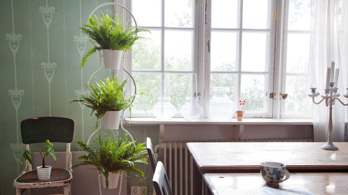 i love the idea of plants inside of the home, i currently have way to many plants in my current tiny space of a room. soon, soon they will have space to breathe for sure.