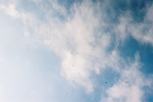 thesedaydreamsagain:  untitled by - yuuki on Flickr.