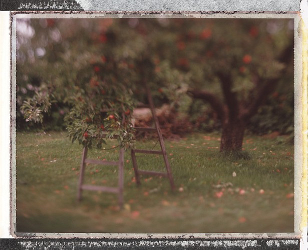 Apple tree & ladder #1 by lost in pixels on Flickr.