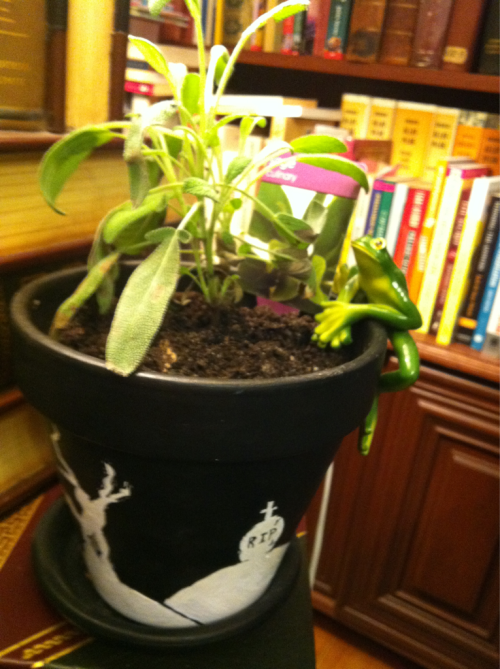 Look, my new sagey plant! In a pot i painted. Also that is my plant guardian pot frog, whom I am yet to name. Yay!