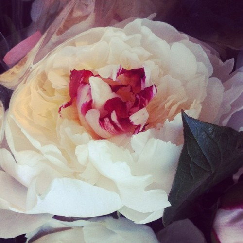 Peony season.  (Taken with instagram)