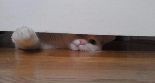 Typical cat! getoutoftherecat:  get out of there cat. you weigh 18 pounds. how do you think you can fit under the door? oh, you want potential adopters to see you? well, okay then.  http://www.petfinder.com/petdetail/22586793