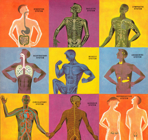 The Human Body: What It Is and How It Works – absolutely amazing, vibrant vintage science illustrations circa 1959