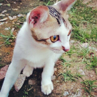 Meeoow~ #cat  (Taken with instagram)