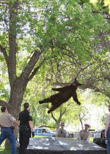 jonahray:  Okay internet…time to photoshop this bear falling out of a tree into as many old pictures of hardcore shows from the 80's as you can. aaaaaand IT BEGINS!!!!