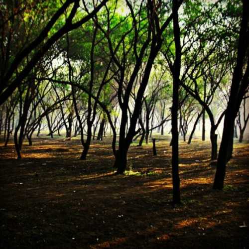 darshitgajjar:  #Shadow #Trees #Nature #Forest (Taken with instagram)
