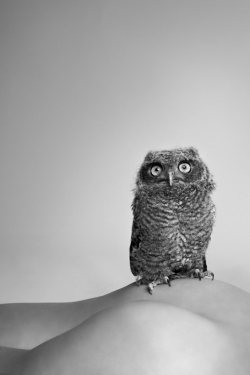 Owl by Ryan McGinley
