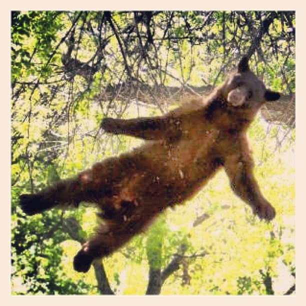 air #bear (Taken with instagram)