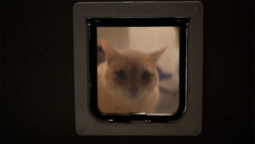 mothernaturenetwork:  DIY cat door recognizes your felineThe computer program recognizes the cat's profile, and if your feline companion is carrying anything in its mouth.