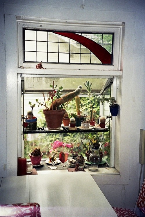 foxontherun:  (via Interiors / house plants)
