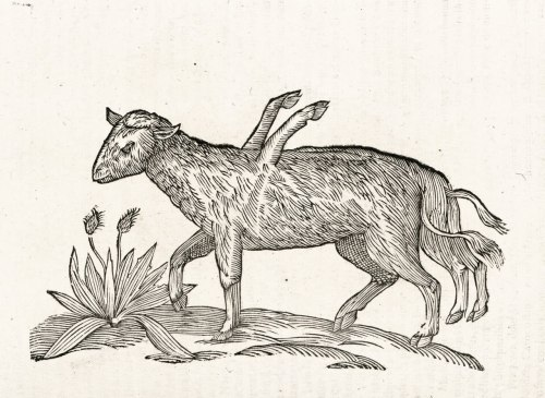 mythologyofblue:  Ulisse Aldrovandi, Monstrorum historia, Lost twin, 1642