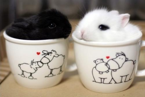 mizufae:  mightypegasusshallruletheworld:  bunnies ^.^  i require a mathematical proof for why small animals in cups is adorable