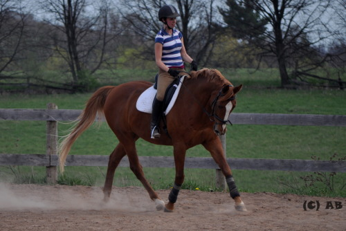 Photo #27: Bobby doing dressage. I believe he's a thoroughbred. a beautiful one at that!