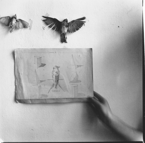 Untitled by Francesca Woodman, Rome, 1977-78