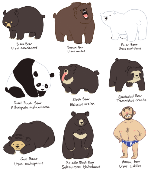 astropolice:  I just love bears so much. Like, a lot. You have no idea. the full-sized picture can be found here not like anyone asked for it though slkdfjalk