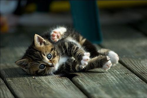 Too Cute for Words via:cutestuff. Todays Cuteness :))