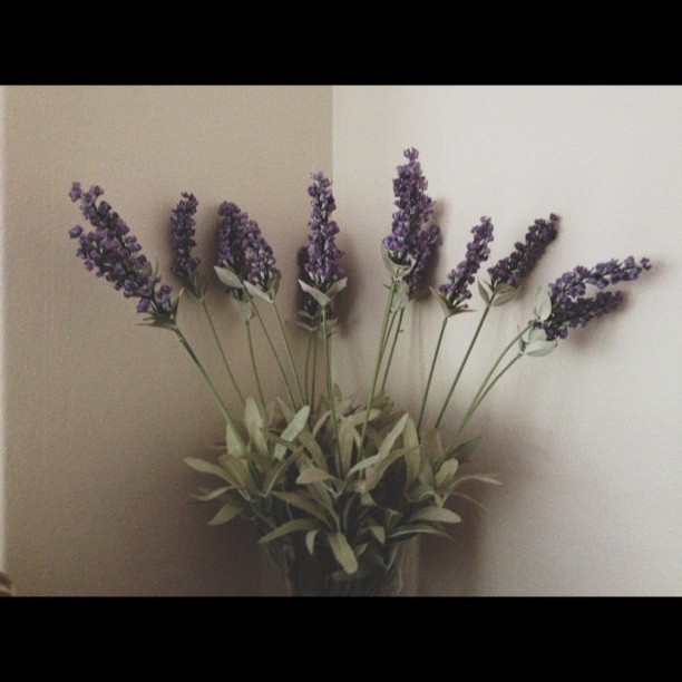 Playing with #vscocam and some lavender!