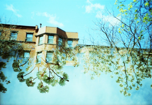 LC-A+, lomo xpro 100 film. Newbury street doubles with blooming trees.