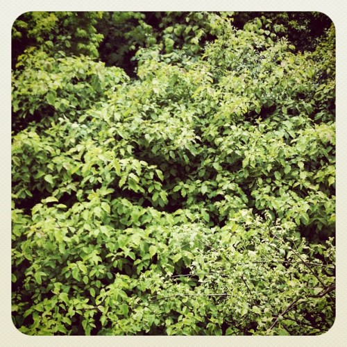 The Wild. #Trees #Nature (Taken with instagram)