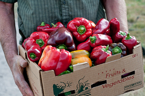 thevegetablemarket:  combat—boots:  Box of Freshly Picked Peppers (by Lindsey Johnson {Cafe Johnsonia})