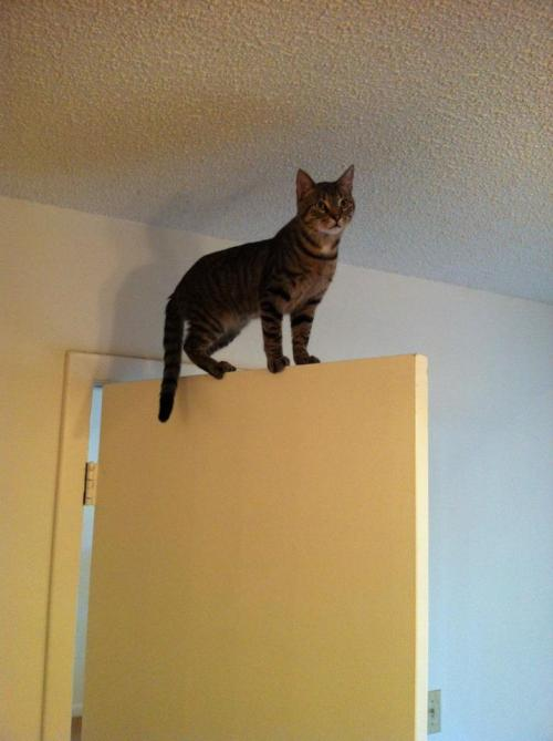 cat-pictures-blog:  My friend's kitty is not normal…