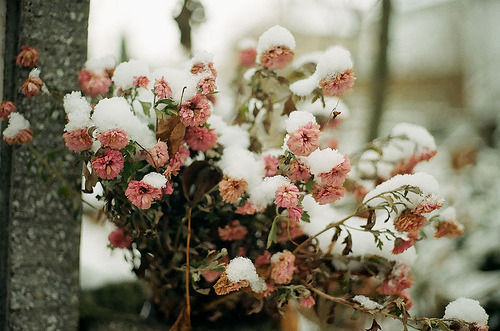 floralls:  winter beauty (by whimsical jane)