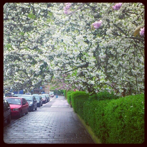 #trees Back Im south I forgot how pretty south London can be (Taken with instagram)