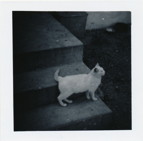 An undated photo of a cat, from a large collection of family photos I picked up at a flea market last month.