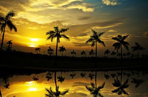 deathtosadness:  Golden sunset by Aramix on Flickr.