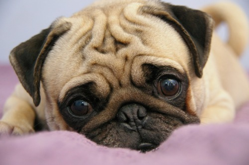 emotipugs:  That feeling you get when your friend is moving away and you don't want them to go because you're going to miss them, even though deep down you know it's for the best, and most of all you just want them to know they'll always be your buddy.  This is me thinking of Terra moving away.