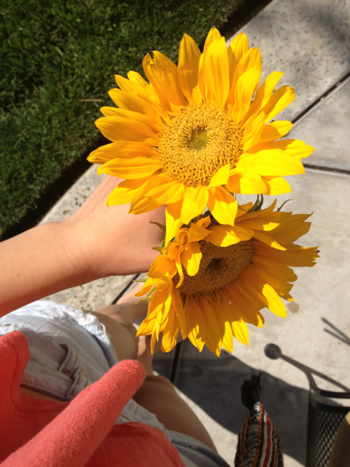 I love sunflowers!